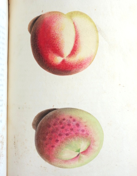 The Horticultural Repository, containing delineations of the best varieties of the different species of English fruits...