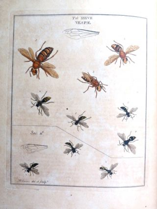 An Exposition of English Insects, With curious observations and remarks, wherein each insect is particularly described; its parts and properties considered; the different sexes distinguished, and the Natural History faithfully related. The whole illustrated... by the author.