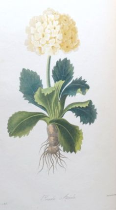 Floral Illustrations of the Seasons, Consisting of Representations Drawn from Nature of Some of the Most Beautiful, Hardy and Rare Herbaceous Plants Cultivated in the Flower Garden, Carefully Arranged According to their Seasons of Flowering, with Botanical Descriptions, Directions for Culture, &c.