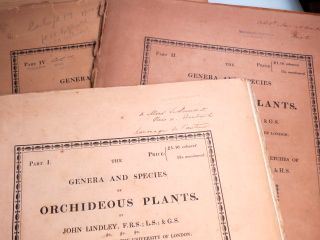 The Genera and Species of Orchideous Plants. Illustrated by drawings on stone from the sketches of Francis Bauer.