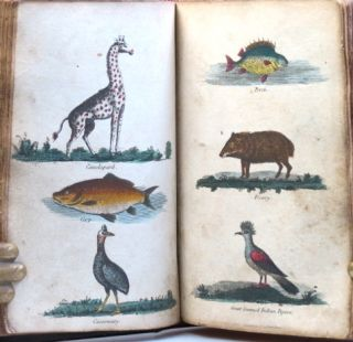 A Dictionary of Natural History; or, Complete Summary of Zoology: Containing a Full and Succinct Description of all the Animated Beings in Nature: Namely Quadrupeds, Birds, Amphibians, Animals, Fishes, Insects, and Worms...