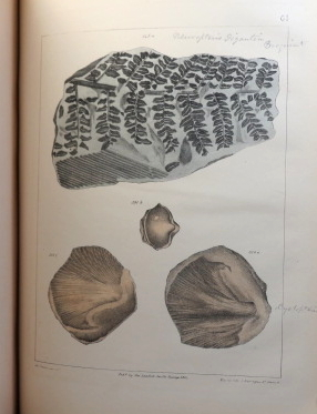 A Collection of Geological Facts and Practical Observations Intended to Elucidate the Formation of the Ashby Coal-Field, in the Parish of Ashby-de-la-Zouch and the Neighbouring District; Being the Result of Forty Years' Experience and Research.
