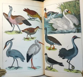 The Instructive Picture Book, or Progressive Lessons from the Natural History of Animals and Plants.